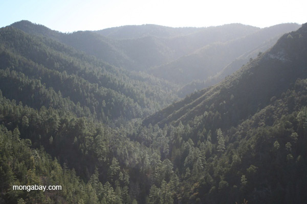Scenery of the Gila Wilderness Area in New Mexico