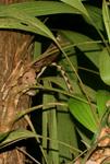 Snake at night in Yasuni National Park in the Ecuadorian Amazon