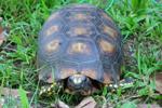 Turtle in Yasuni National Park in the Ecuadorian Amazon