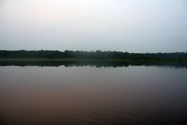 Anangucocha lake in Yasuni National Park in the Ecuadorian Amazon