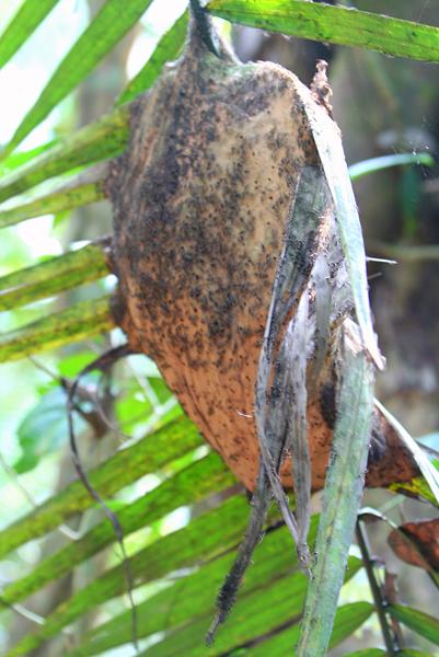 Ants swam leaf in Yasuni National Park in the Ecuadorian Amazon