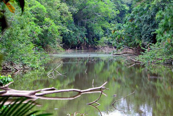 Oxbow lake in Yasuni National Park in the Ecuadorian Amazon