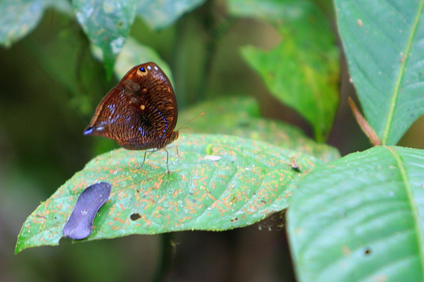 Butterfly in Yasuni National Park in the Ecuadorian Amazon