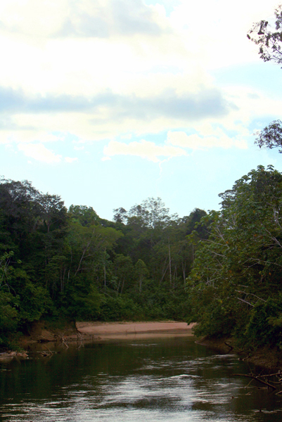 River in Yasuni National Park in the Ecuadorian Amazon