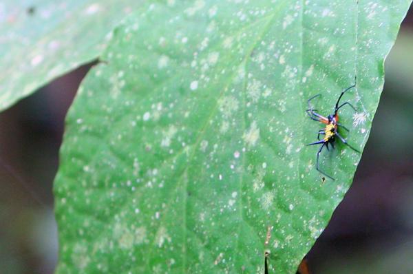Small yellow-black spider in Yasuni National Park in the Ecuadorian Amazon