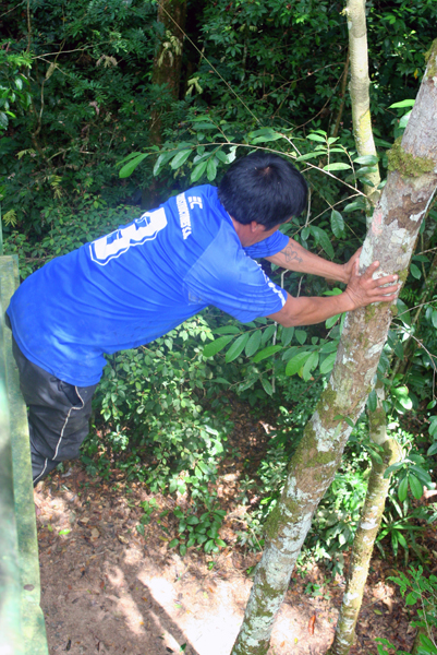 Huaorani guide skips ladder and climbs down tree (don't try this at home) in Yasuni National Park in the Ecuadorian Amazon