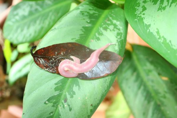 Invertebrate in Yasuni National Park in the Ecuadorian Amazon
