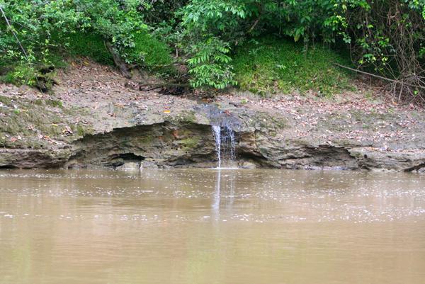 Runoff into Tiputini River in Yasuni National Park in the Ecuadorian Amazon