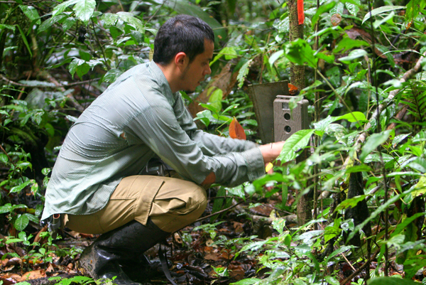 A researcher sets a camera trap in Yasuni National Park in Ecuador. Photo by: Jeremy Hance.