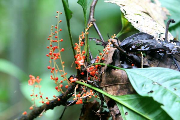 Flowers in Yasuni National Park in the Ecuadorian Amazon