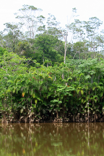 Vegetation around an ox-bow lake in Yasuni National Park in the Ecuadorian Amazon