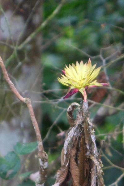 Flower in Yasuni National Park in the Ecuadorian Amazon