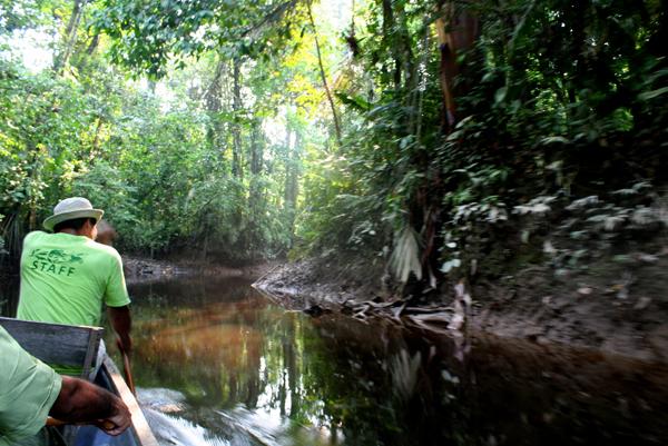 Paddling down Anangu Creek in Yasuni National Park in the Ecuadorian Amazon