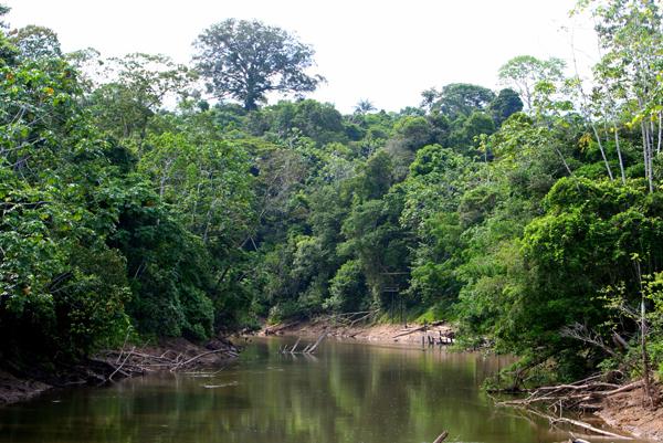 River in Yasuni National Park in the Ecuadorian Amazon