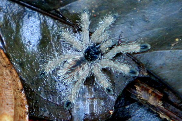 Tiny spider in Yasuni National Park in the Ecuadorian Amazon