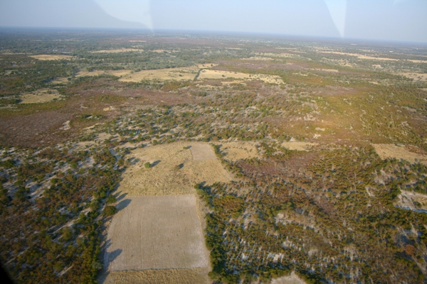 Deforestation on the edge of the Okavango delta
