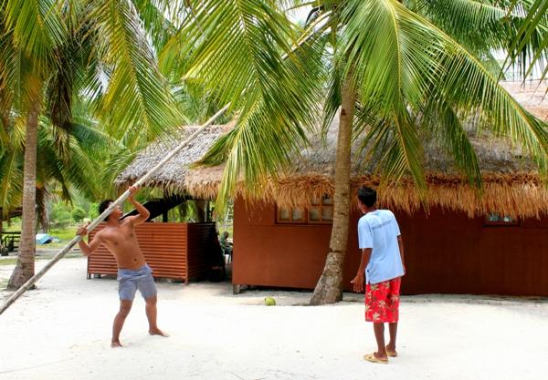 Fishing for coconuts on Mantanani Island