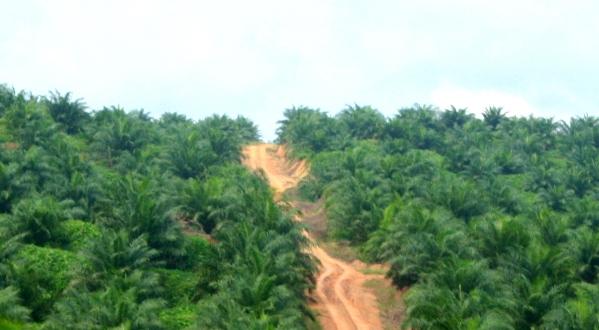 Palm oil plantation in Sabah, Malaysia