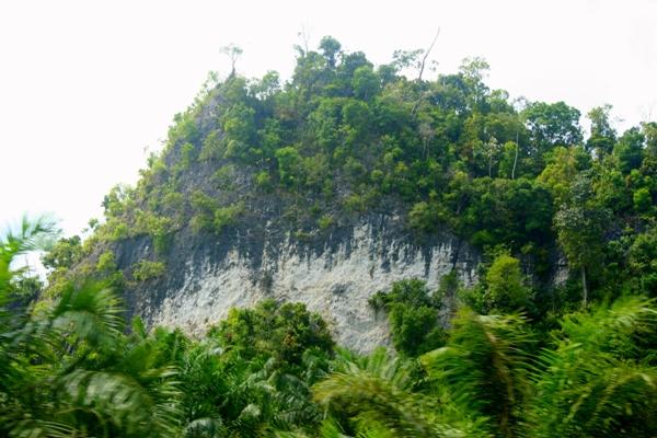 Rainforest on karst peak with palm oil plantation below