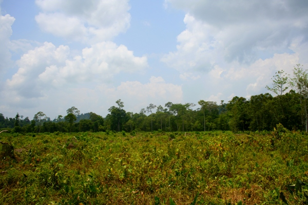 Cleared rainforest likely for palm oil plantation in Sabah, Malaysia