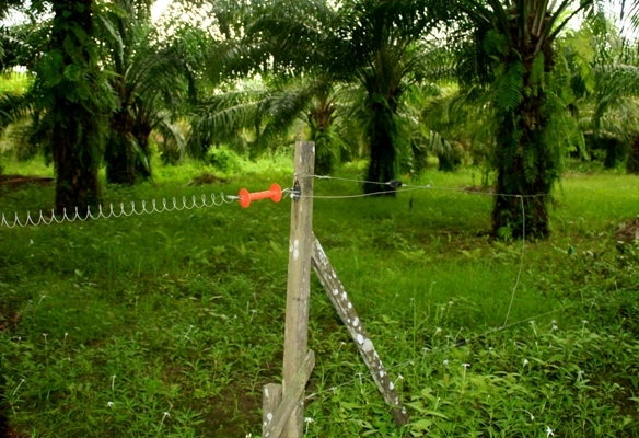 Electric fence to keep elephants out of palm oil plantation in Sabah, Malaysia
