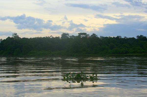 The Kinabantagan River in Sabah, Malaysia