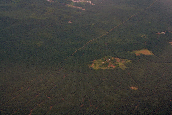 Aerial view of palm oil plantations in Sabah, Malaysia