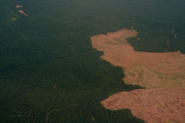 Aerial view of palm oil plantations and replanting areas in Sabah, Malaysia