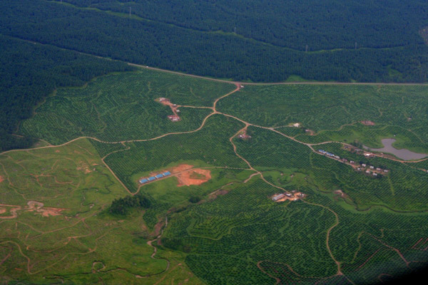 Aerial view of several stages of palm oil plantations: mature, young, and newly cleared