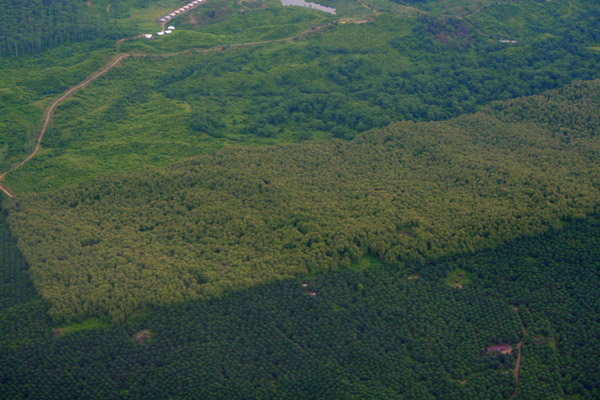 Aerial view of palm oil plantations and forest in Sabah, Malaysia