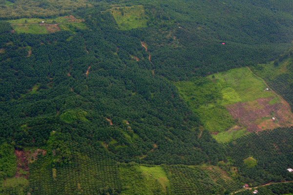 Aerial view of several stages of palm oil plantations: mature, young, and newly cleared in Sabah, Malaysia. Photo credit: Jeremy Hance.