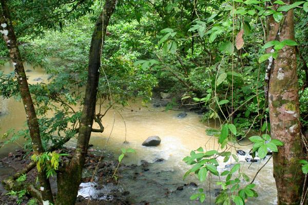 River near lodge in the Tabin Wildlife Reserve in Sabah, Malaysia