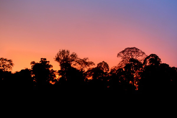 Rainforest at sunset in Tabin Wildlife Reserve, Sabah, Malaysia