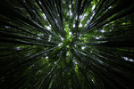 Canopy of a bamboo forest