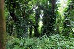 Rainforest along the Hana Road