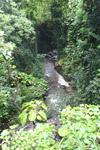 Creek along the Hana Highway