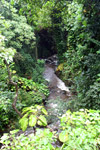 Creek along the road to Hana