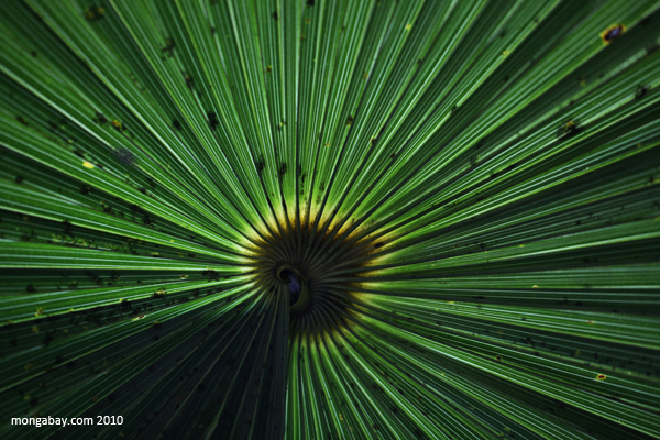 Palm leaf in Mexico
