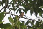 Bird [panama_0020]
