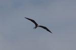 Bird [panama_0054]