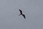 Bird [panama_0057]