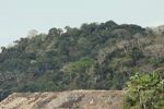 Forest clearing along the Panama Canal [panama_0059]
