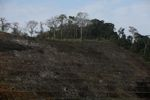 Clearing of a forested hillside [panama_0066]