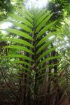 Palm frond in the rainforest