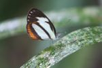 Orange, black, and white butterfly [panama_0179]