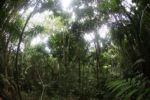 Rain forest in Panama