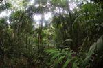 Rain forest in Panama [panama_0211]