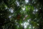Palm grove in the Panamanian rainforest