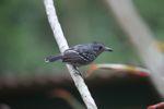 Bird [panama_0235]