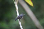 Bird [panama_0236]